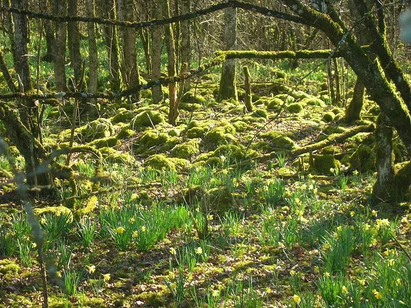 Le parc national de forêts