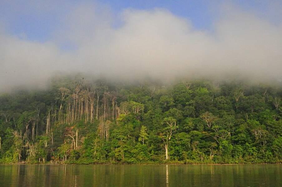 Le parc amazonien de Guyane