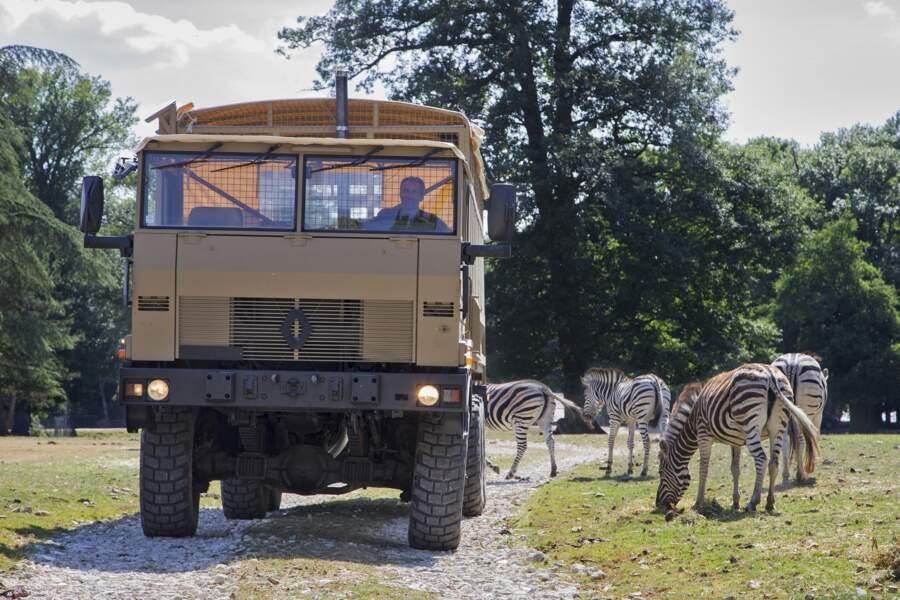 Le Zoo Safari de Thoiry