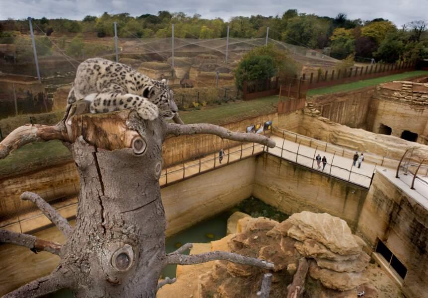 Le Bioparc de Doué-la-Fontaine