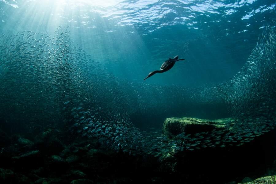 A la pêche à la sardine