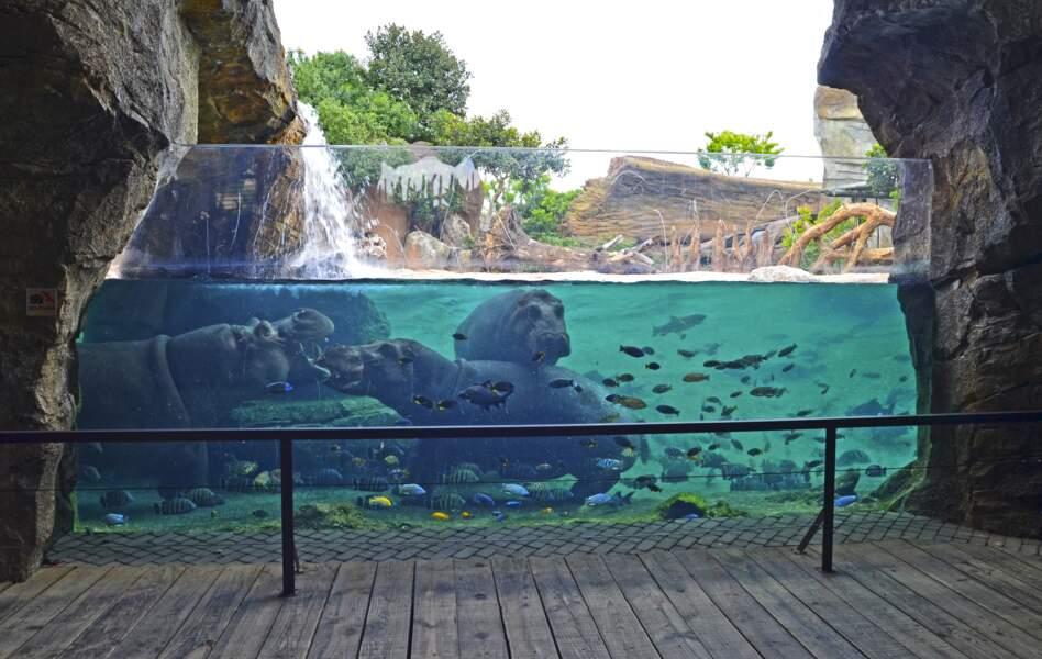 Le Bioparc de Valence, Espagne