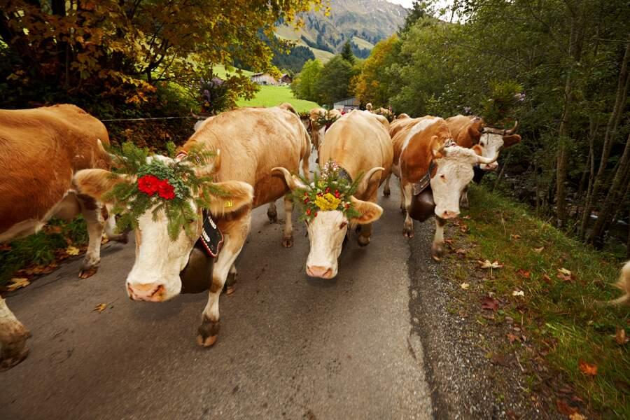 Une tradition qui remonte au Moyen Âge et qui a façonné l'économie alpine locale