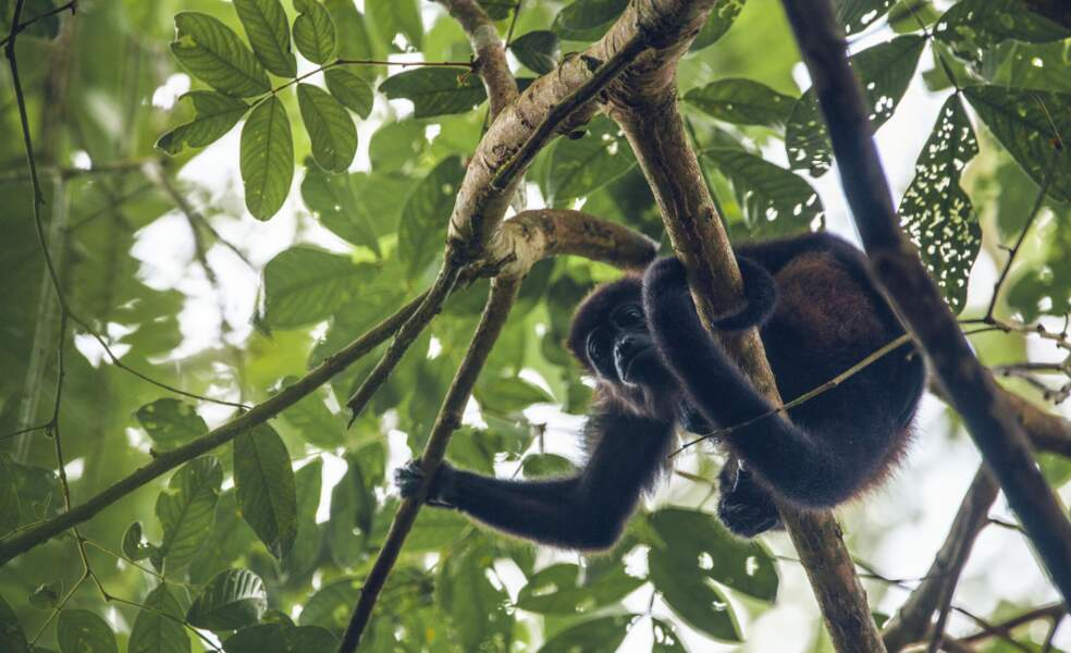 Parc National de Corcovado : un monde protégé