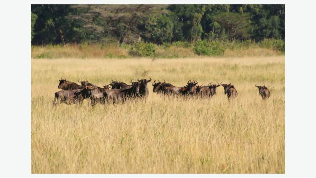 La faune du Swaziland