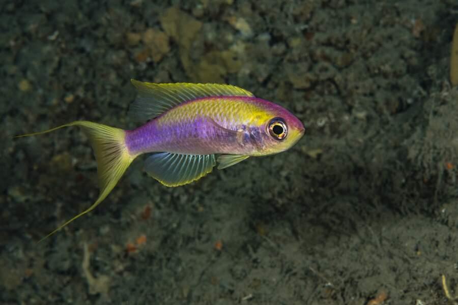 Documenter la faune sous-marine méconnue