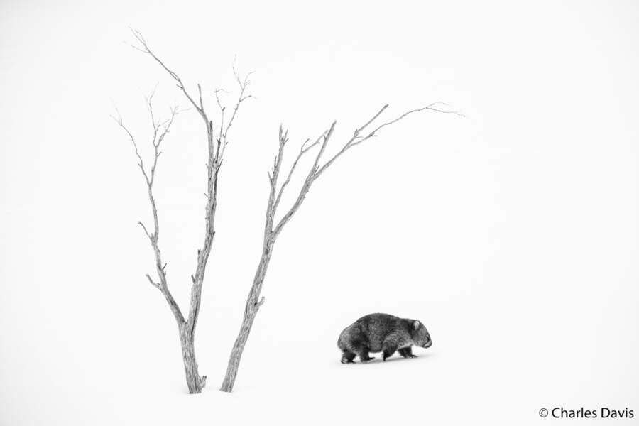 Wombat solitaire
