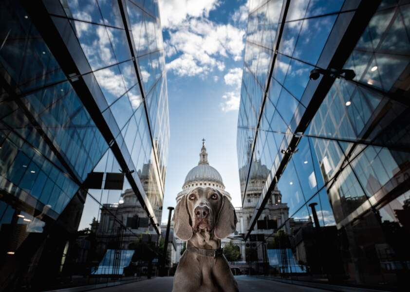 La cathédrale Saint-Paul de Londres et sa coupole canine