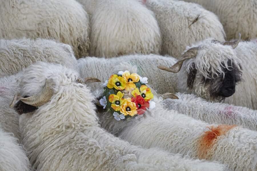Mouton fleuri