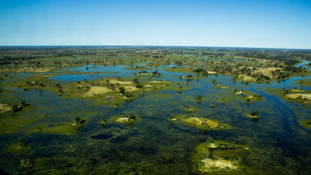 Delta de l'Okavango (Botswana)