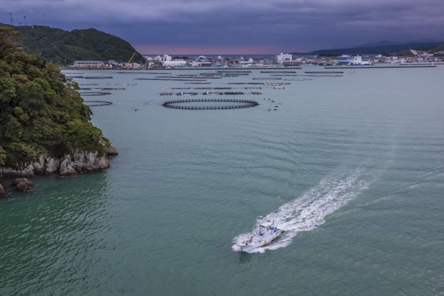 L'aquaculture au port de Kushimoto