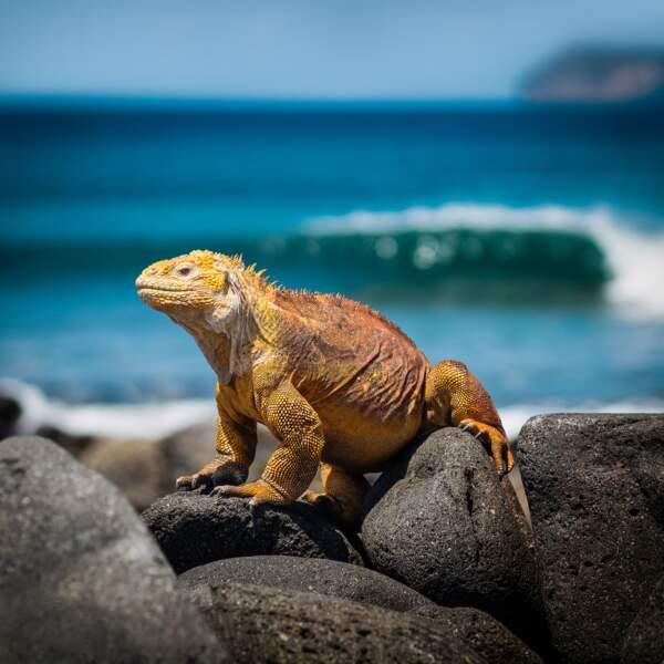 Galápagos (Equateur)