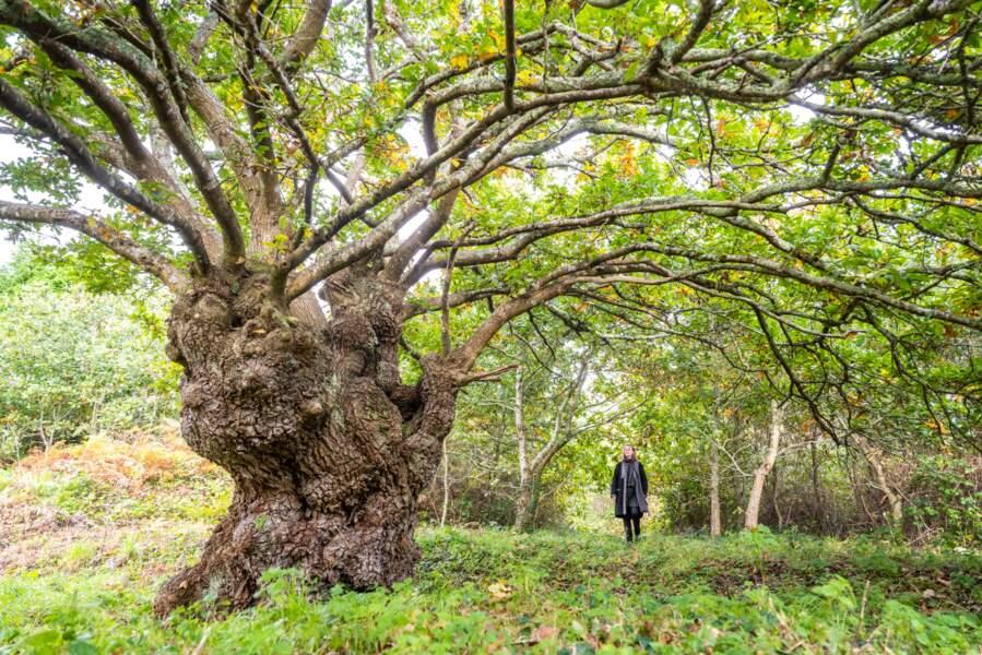 Le chêne aux mille visages de Brest