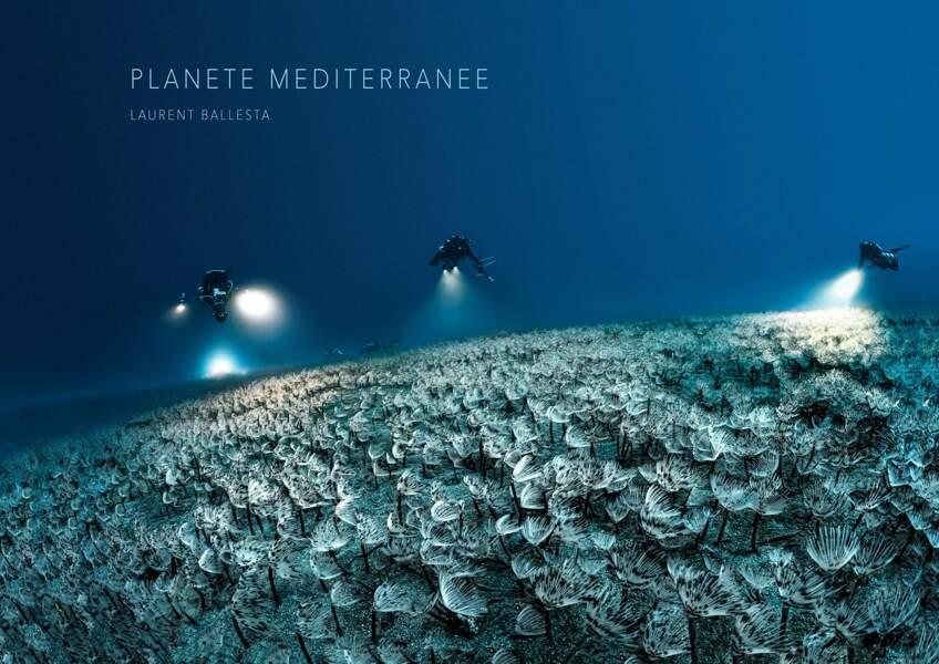 Planète Méditerranée, plongée dans les fonds marins