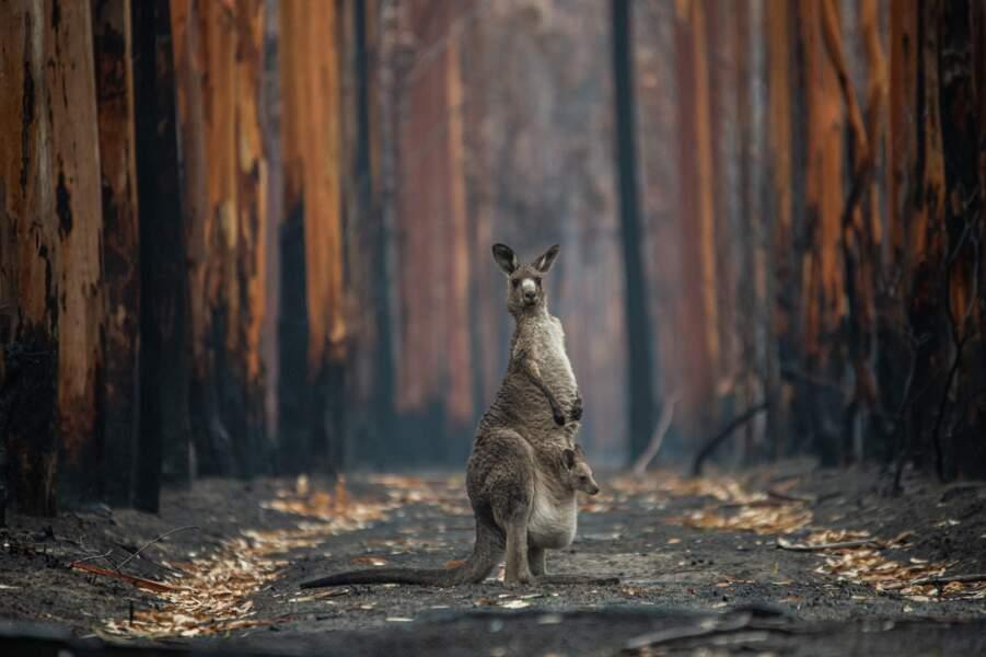 Espoir dans la forêt brûlée