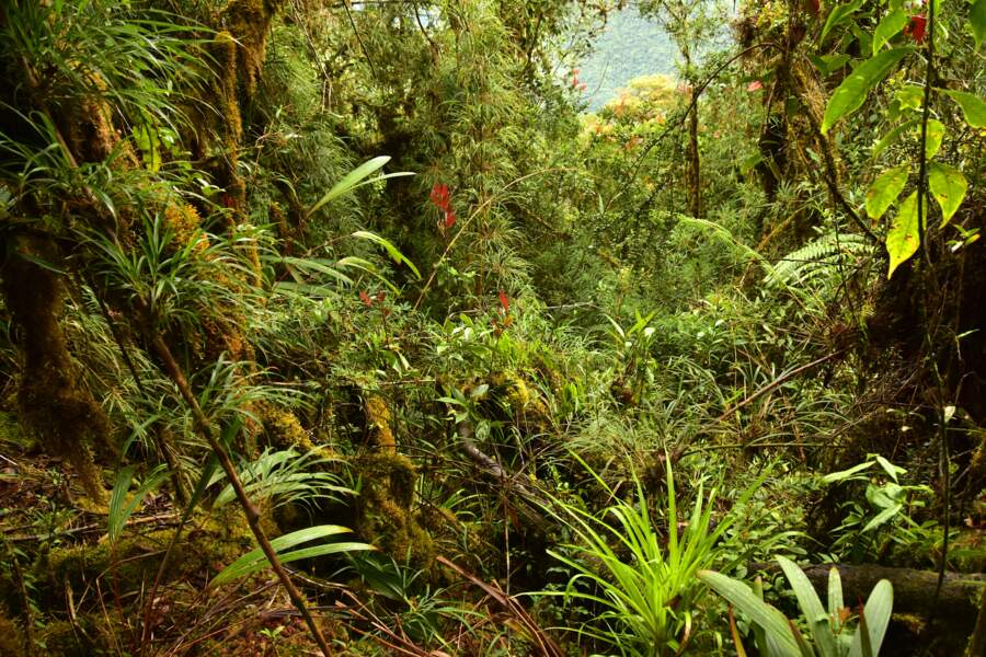 Une biodiversité à protéger