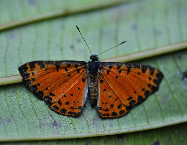 Papillons inconnus