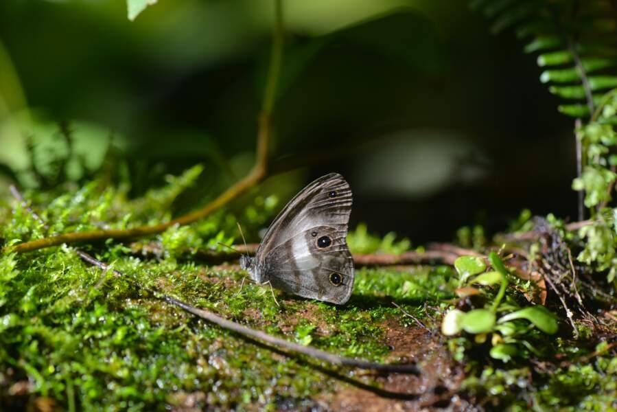 Caché dans la canopée