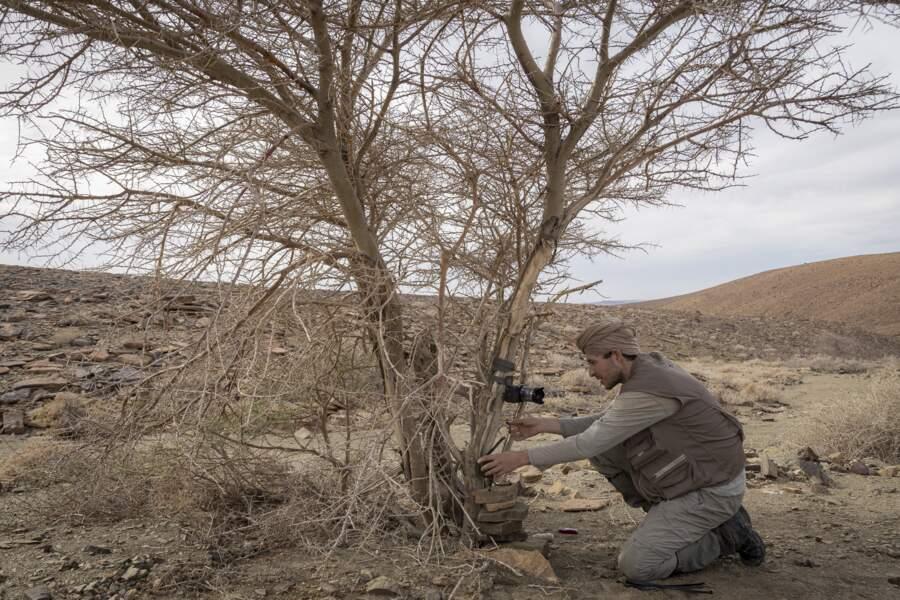 Des pièges pour photographier et compter les habitants du désert