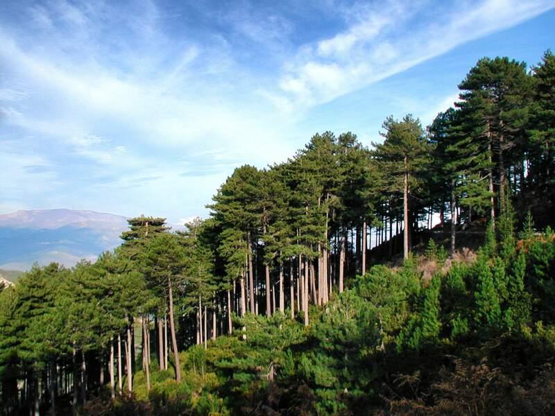 Forêt Domaniale Rospa Sorba