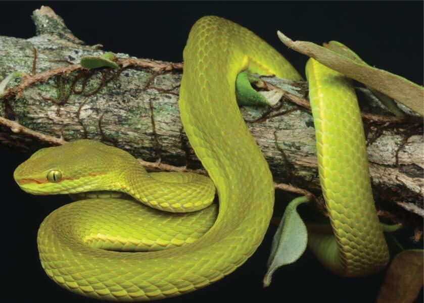 7 - Un serpent nommé d'après un personnage de Harry Potter