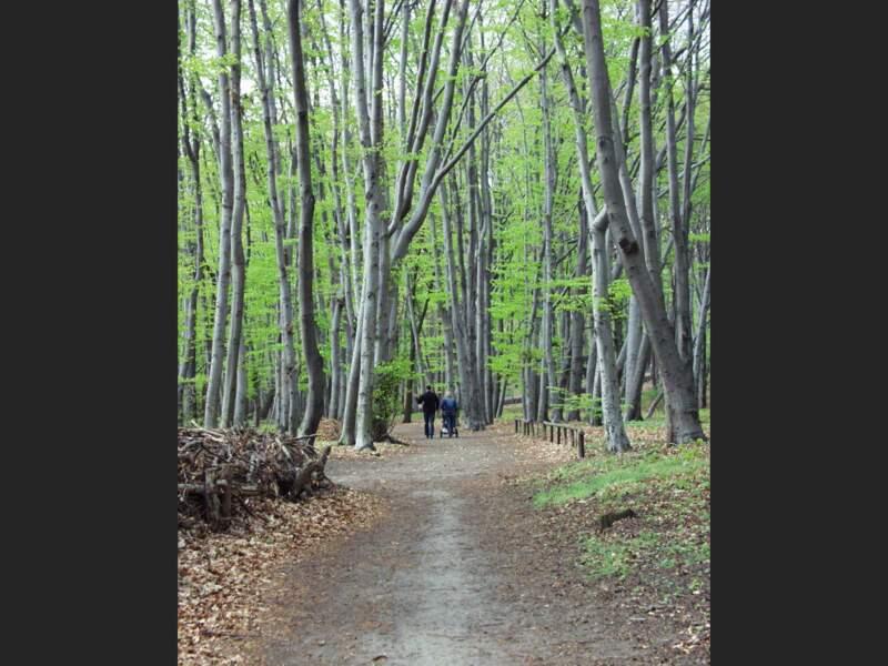 Forêt à quelques kilomètres de Berlin, en Allemagne