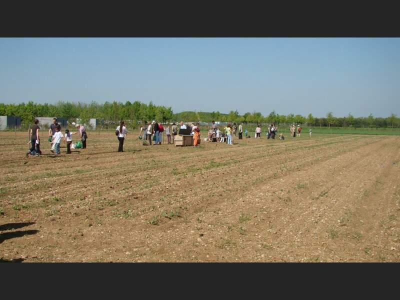 Munichois cultivant des légumes, à quelques kilomètres du centre-ville, en Allemagne