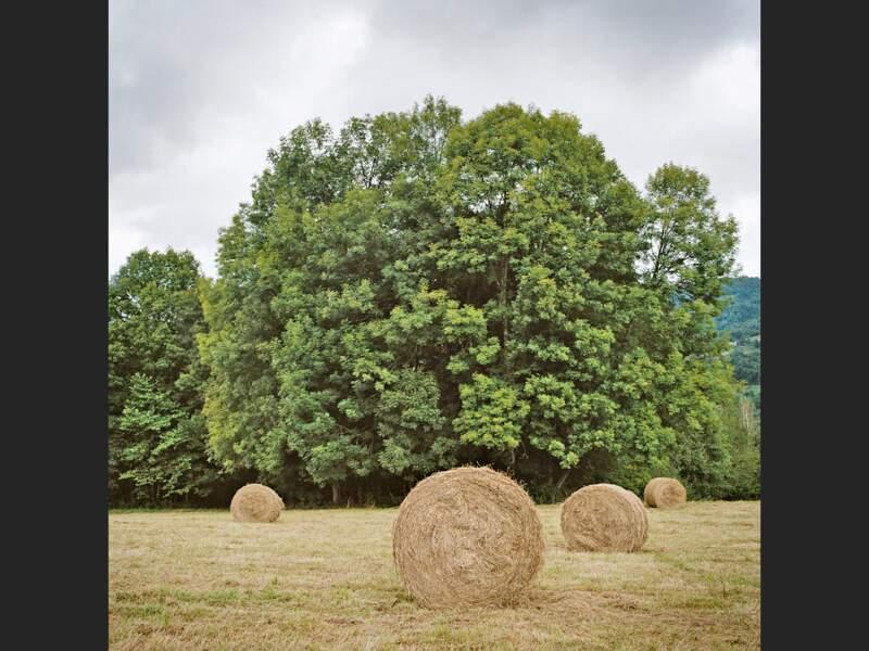 Agriculture en Ariège, dans les Pyrénées françaises
