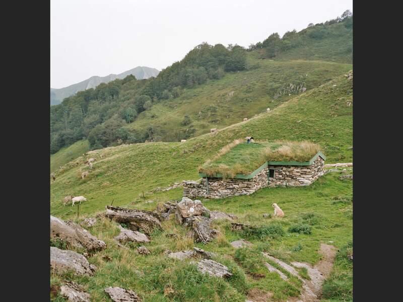 Cheptel ovin en Ariège, dans les Pyrénées françaises