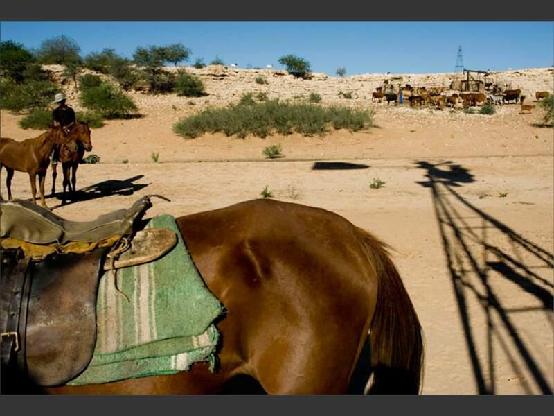 Pour réduire les distances, les cow-boys du Kalahari enjambent les barbelés du Botswana