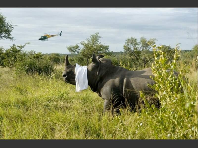 Un rhinocéros que les braconniers n'auront pas