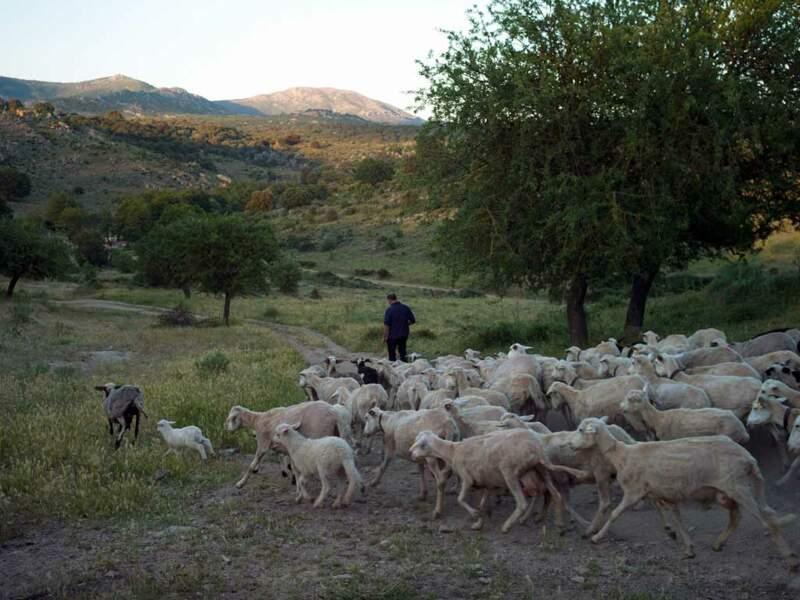 Le mode de vie des bergers leur permet de vivre âgés