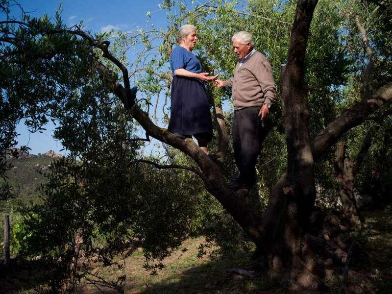 Dario et Elvira, 80 ans passés, continuent de s'occuper de leurs oliviers
