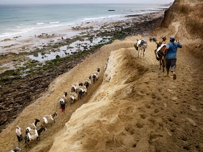 À Larache, lorsque les camions sont interdits, les ânes prennent le relais