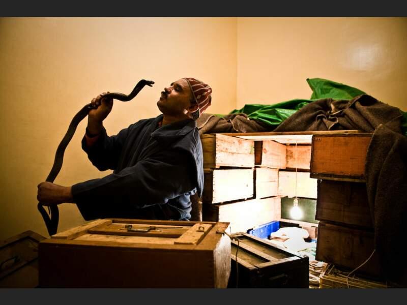 Ahmed, charmeur de serpents, exerce son métier sur la place Djemáa el-Fna de Marrakech, au Maroc.