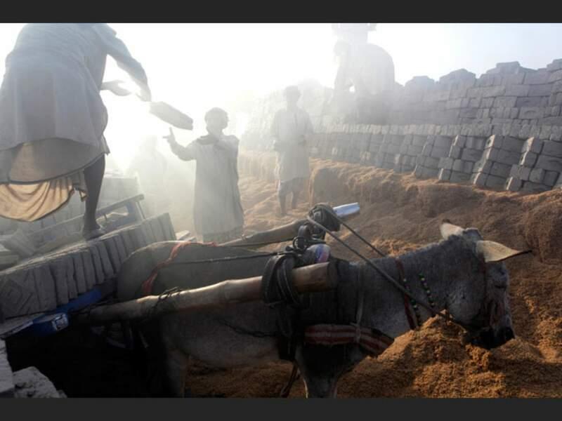Briques d'argile fabriquées selon la tradition ancestrale, sur les rives de l'Indus, au Pakistan