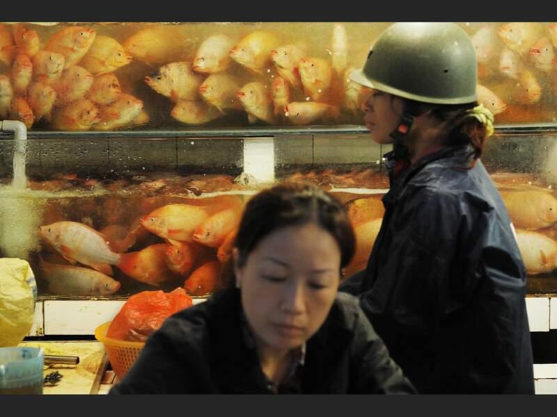 Au marché du pont Long Biên, à Hanoi, on achète son poisson vivant (Vietnam).