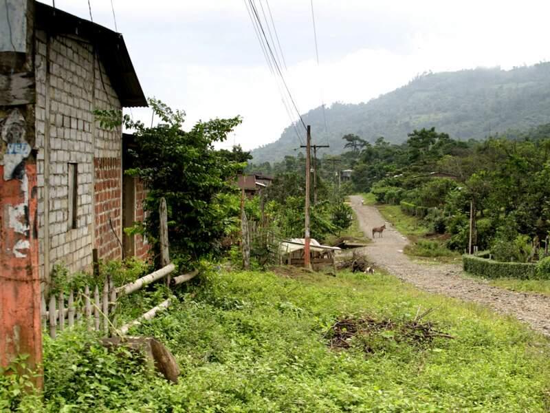 Paysage équatorien