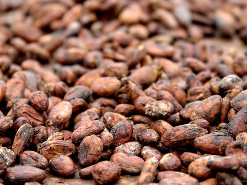 Gros plan sur des fèves de cacao