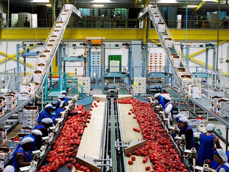 Les femmes en provenance d'Afrique et des pays de l'Est travaillent dans des usines de tri ou d'emballage.
