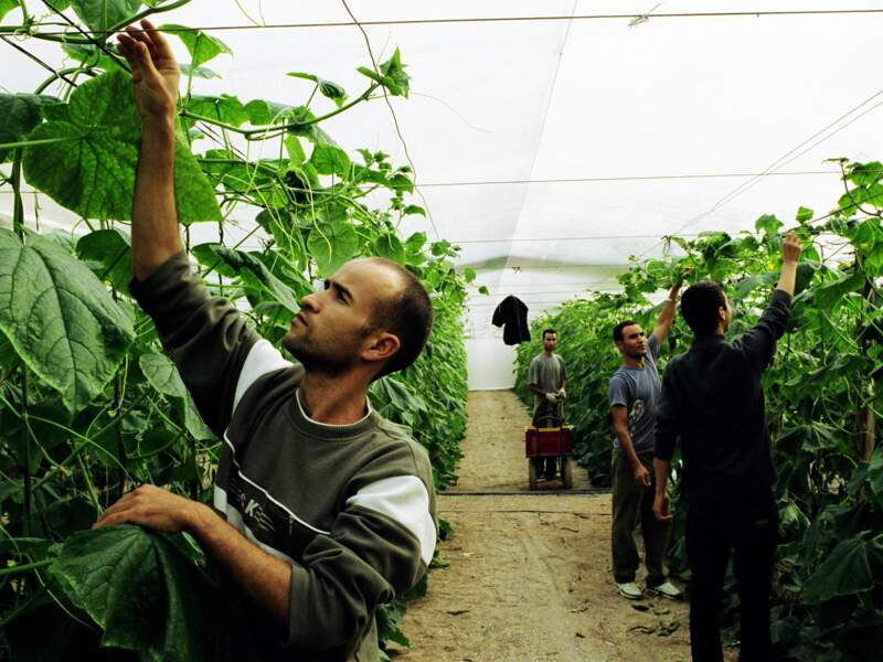 Ces travailleurs font partie d'une minorité dans la région, les Marocains détenteurs du permis de résidence.