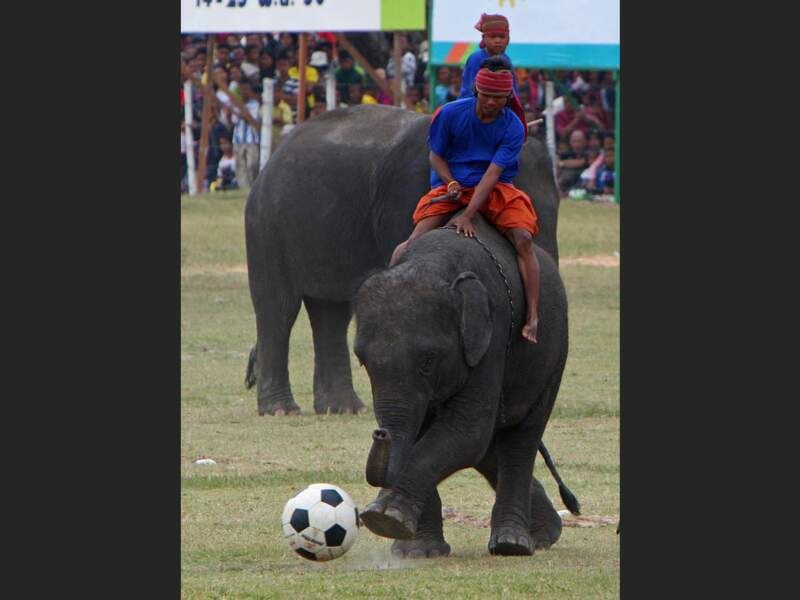 Festival des éléphants de Surin, en Thaïlande.