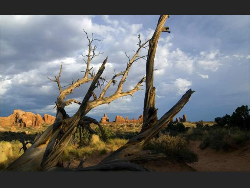 Paysage chaotique dans le parc national des Arches (Utah, Etats-Unis).