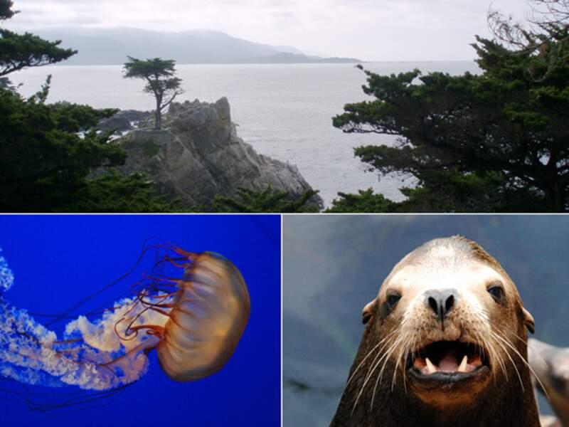 La ville de Monterey possède le plus grand aquarium des Etats-Unis.