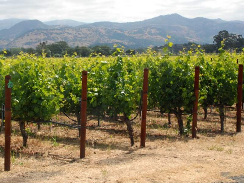 La Napa Valley produit des vins de grande qualité.