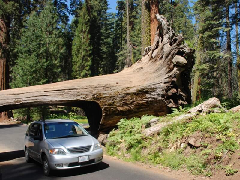Le Sequoia Park, qui ne pouvait pas mieux porter son nom.