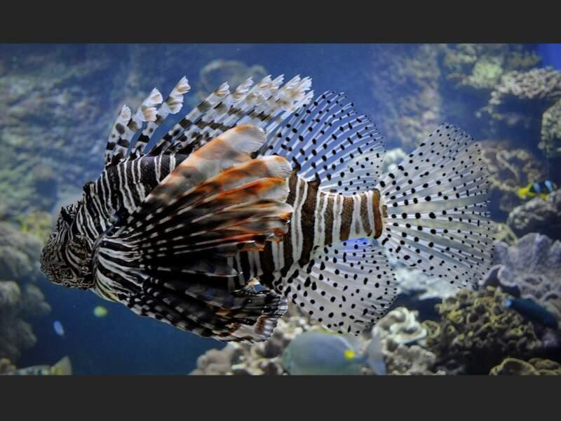Aquarium des lagons à Nouméa, en Nouvelle-Calédonie