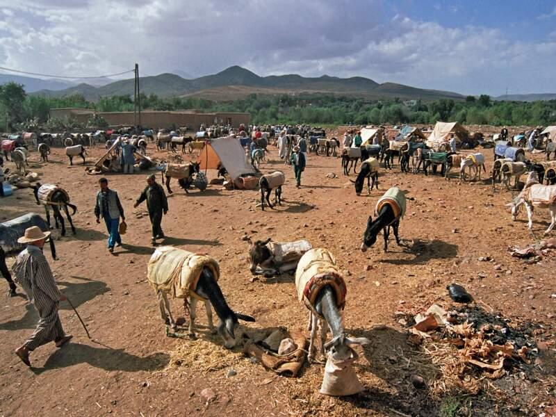 Le parking d'ânes du marché d'Asni