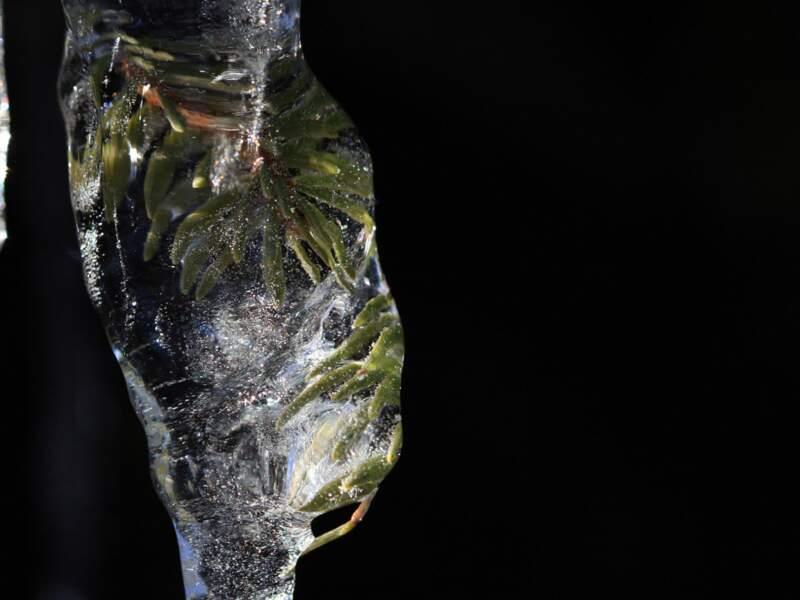 Détail de glace
