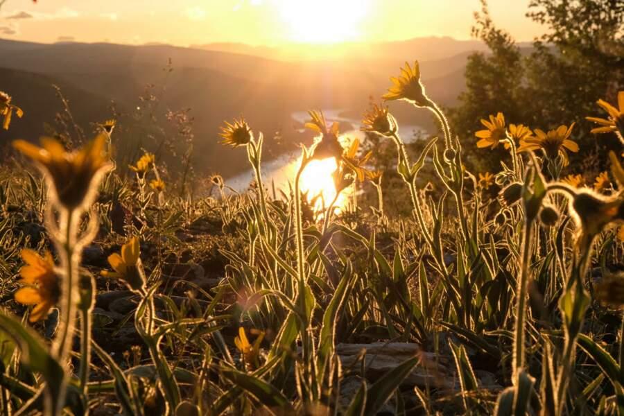 Un ruban d'argent dans la lumière dorée du printemps